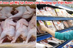 Vì sao gà Mỹ lại được ưa chuộng tại Việt Nam?