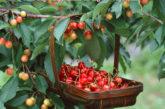 Trái cây được nhập khẩu từ Mỹ về Việt Nam