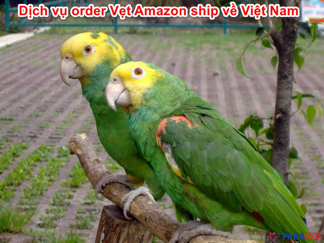 dich-vu-order-vet-amazon-ship-ve-viet-nam