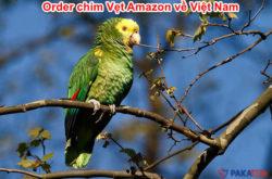 order-chim-vet-amazon-ve-viet-nam